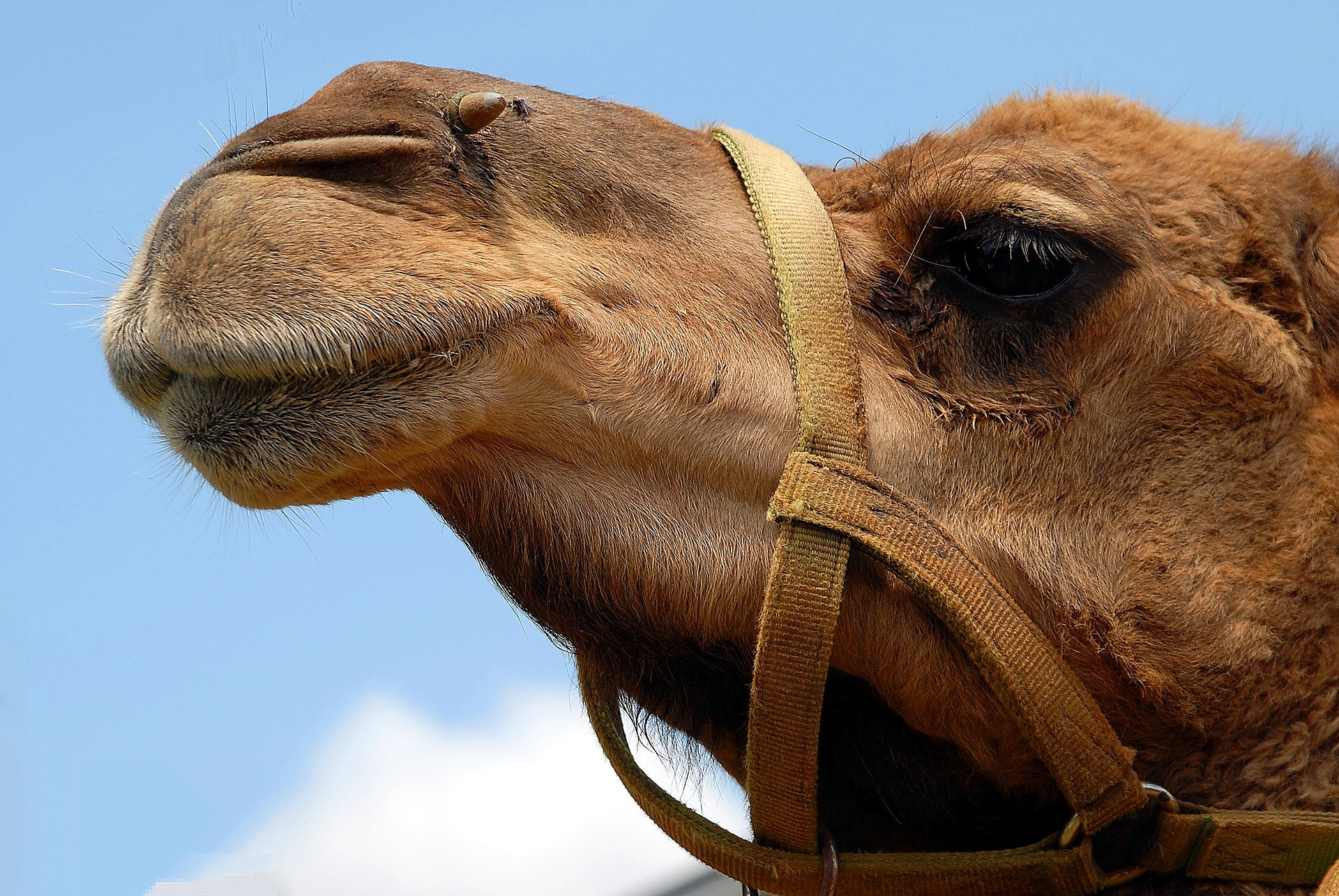 Weird reasons for divorce - woman preferred camel to husband